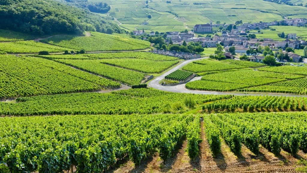 Vineyards near Fuisse - Burgundy