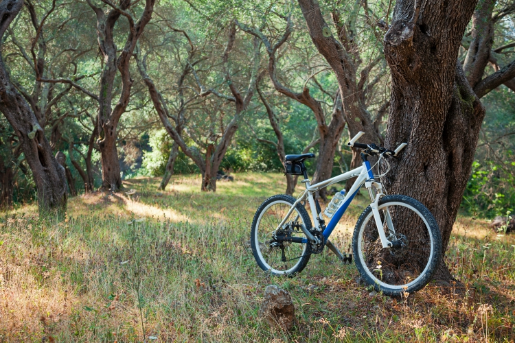 Mountain bike in an olive grove, against a tree