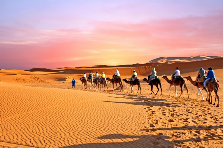 Camel caravan going through the sand dunes in the Sahara Desert winter sun | winter sun