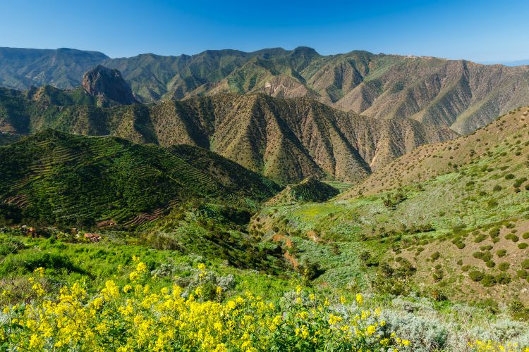View mountain valley palm tree blue ocean sea, Agulo, La Gomera, Canary Islands