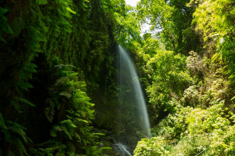 os Tilos waterfall Laurisilva in La Palma laurel forest at Canary Islands