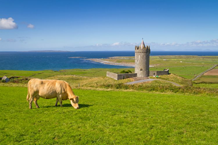 Doonagore castle with Irish cow Coastal holidays
