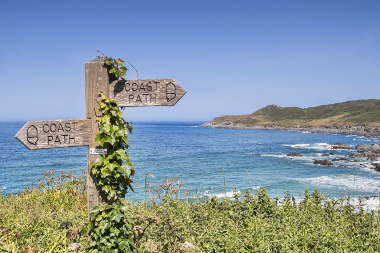 17 June 2017: Woolacombe, North Devon, England, UK - Ivy covered sign on the South West Coast Path above Barrican Beach.