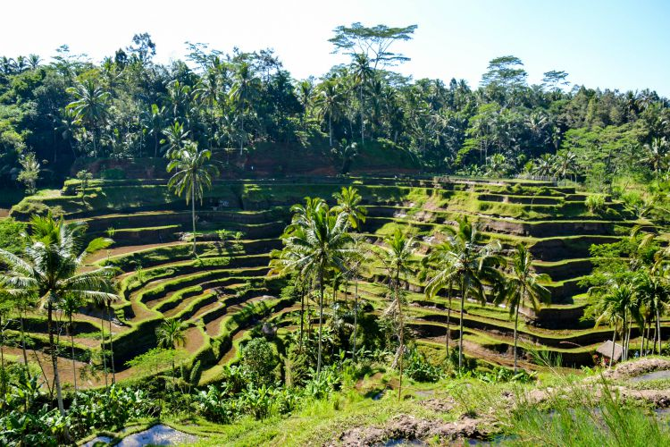 Romantic Things to Do in Bali, visit the Tegalalang rice terrace
