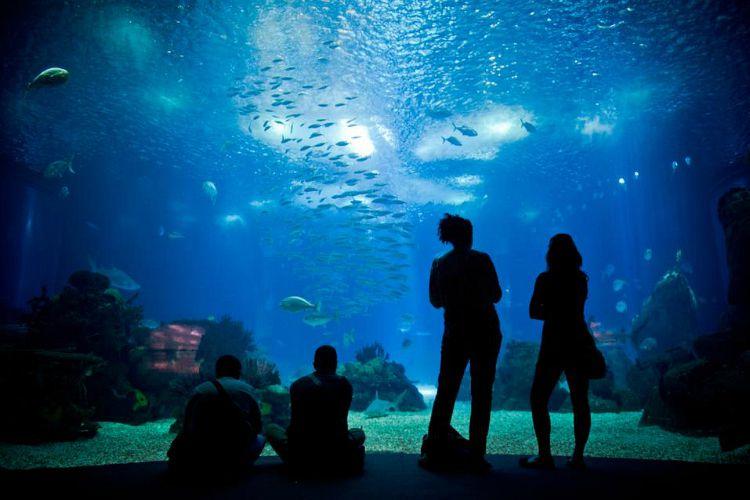 Lisbon aquarium is also the largest aquarium in Europe