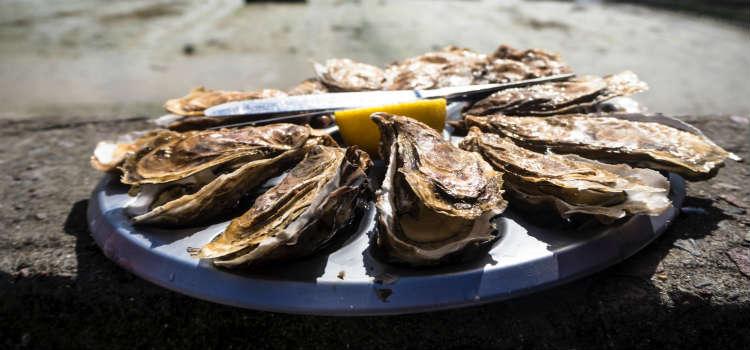 oysters dubrovnik food croatia