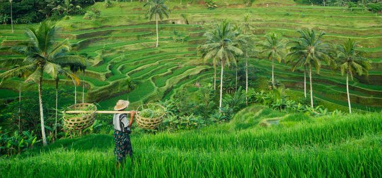 new holiday destinations 2020 ubud rice farmer