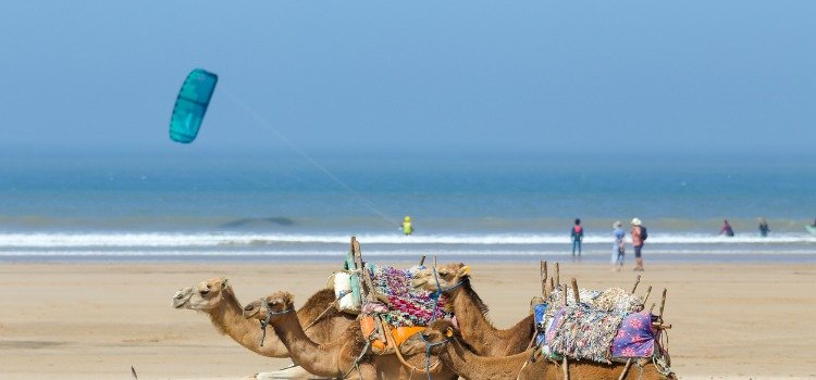 Things to do in Marrakech - Marrakech beach