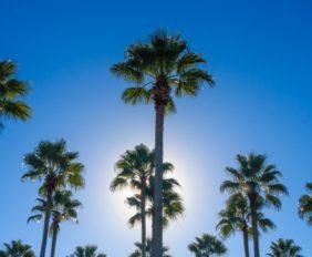 florida palms