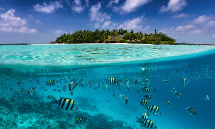 Split view in the Maldives islands