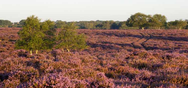 Suffolk Heaths