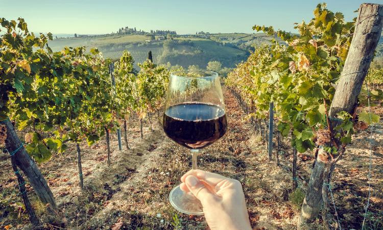 wine-tasting in Italy