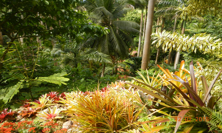 Hunte's Gardens Things to do in Barbados
