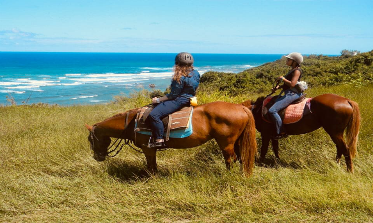 Things to do in Barbados - horse riding
