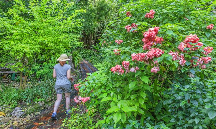 Andromeda Botanic Gardens Barbados