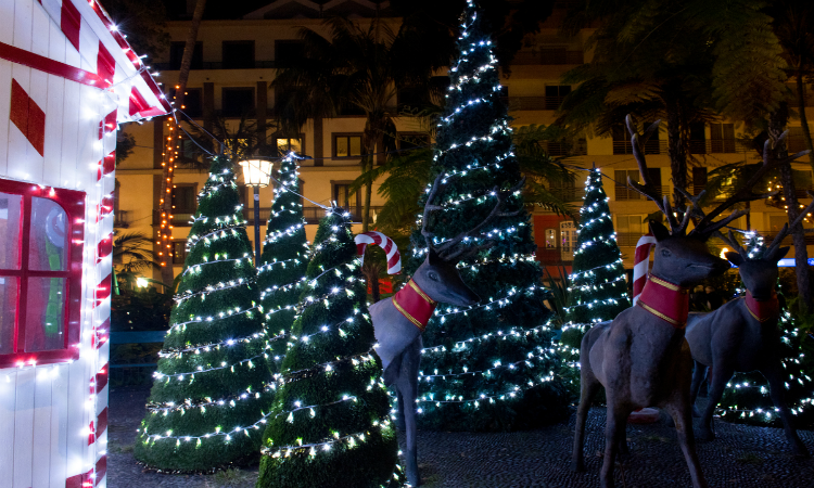 Christmas in Funchal scene