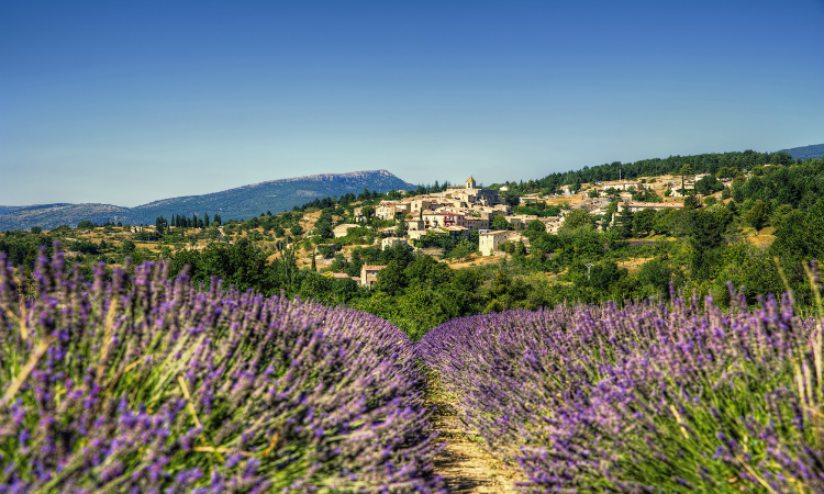 The Village of Aurel Near a Lavender Field in Beautiful Provence - Unique Vacation Ideas