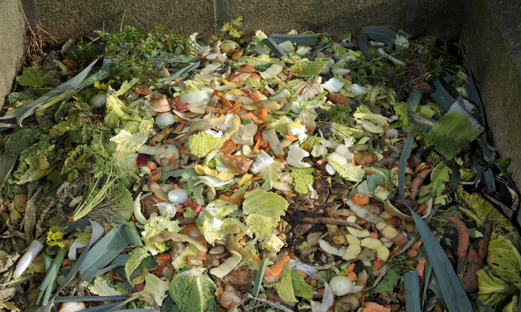 minimise food waste - tackle climate change for earth day