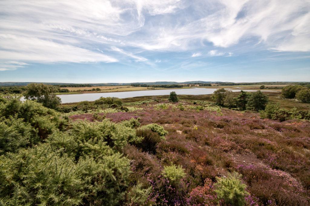 Arne RSPB Nature Reserve in Dorset, England