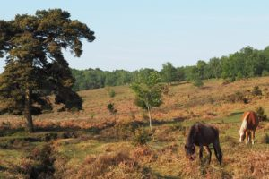 Horses in New Forest Hampshire Travel Guide