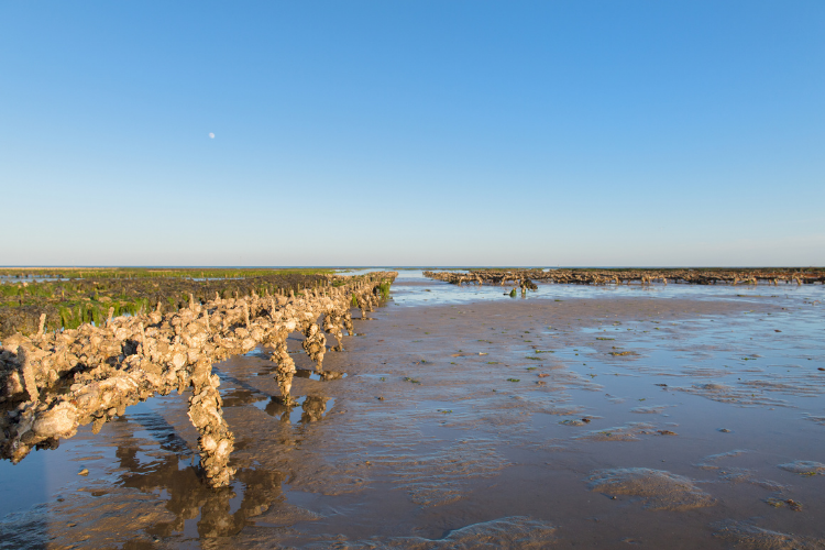 Oyster banks in Ile de Re