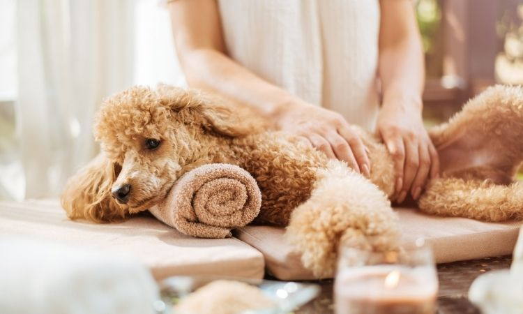 'Best In Show' Grooming Experience