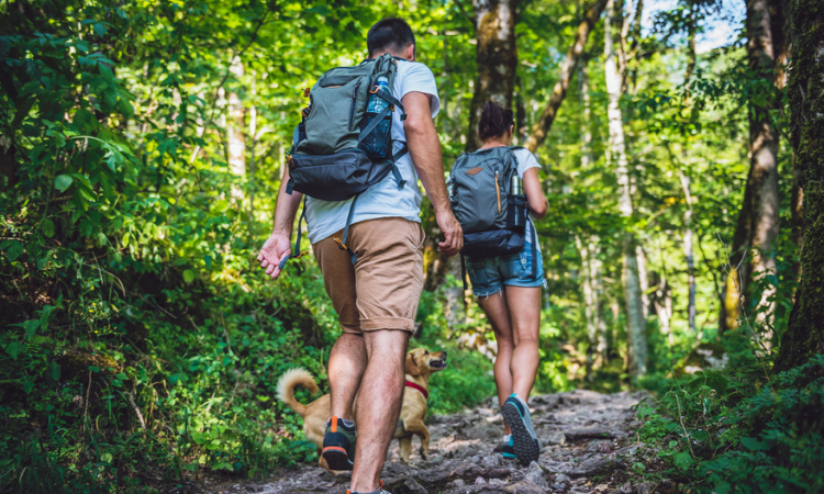 Couple with a dog hiking in forest stock photo - slow travel