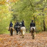 The Best Places for a UK Horse Riding Holiday